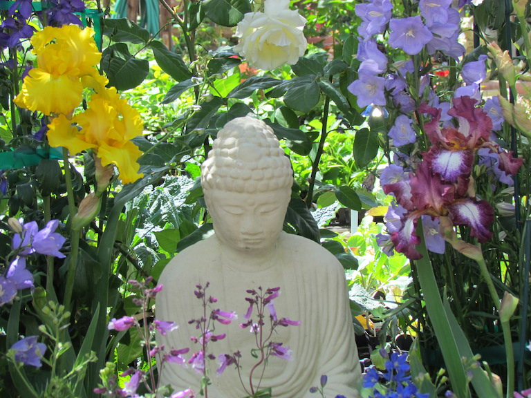 Buddha statue in the garden center surrounded by iris