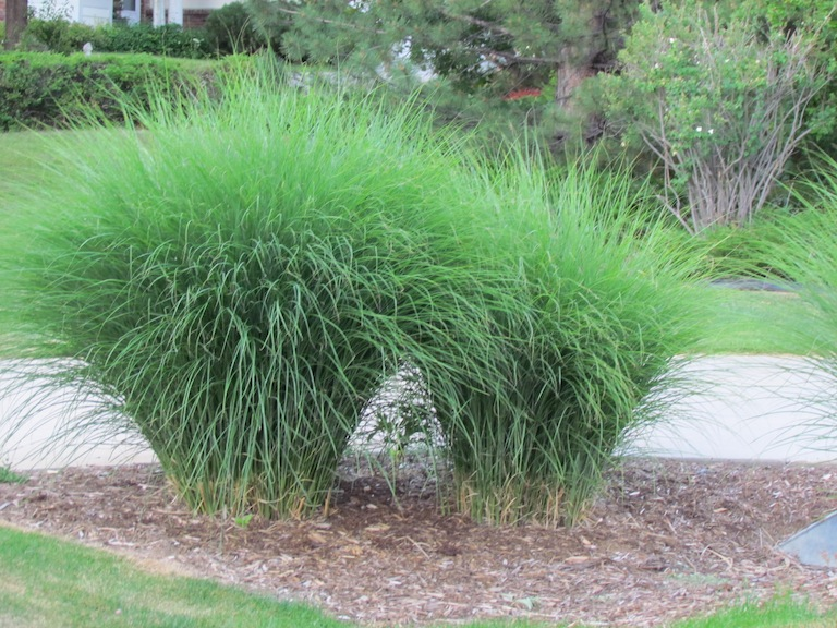 How to plant a sustainable garden in boulder colorado for Landscaping with zebra grass