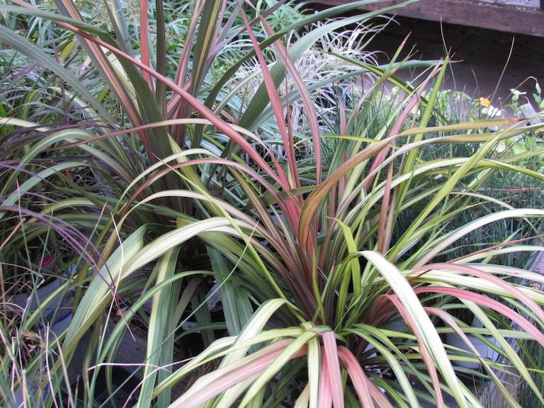 Ornamental Grasses Colorado How to plant a sustainable garden in boulder colorado using annual how to plant a sustainable garden in boulder colorado using annual and perennial drought tolerant ornamental grasses workwithnaturefo
