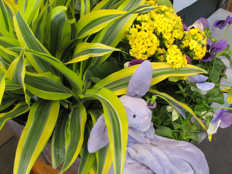 Easter plants with purple bunny