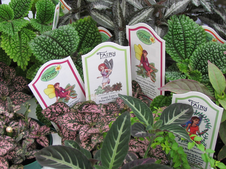 Fairy gardening the why where and how fairy garden Fairy garden plants