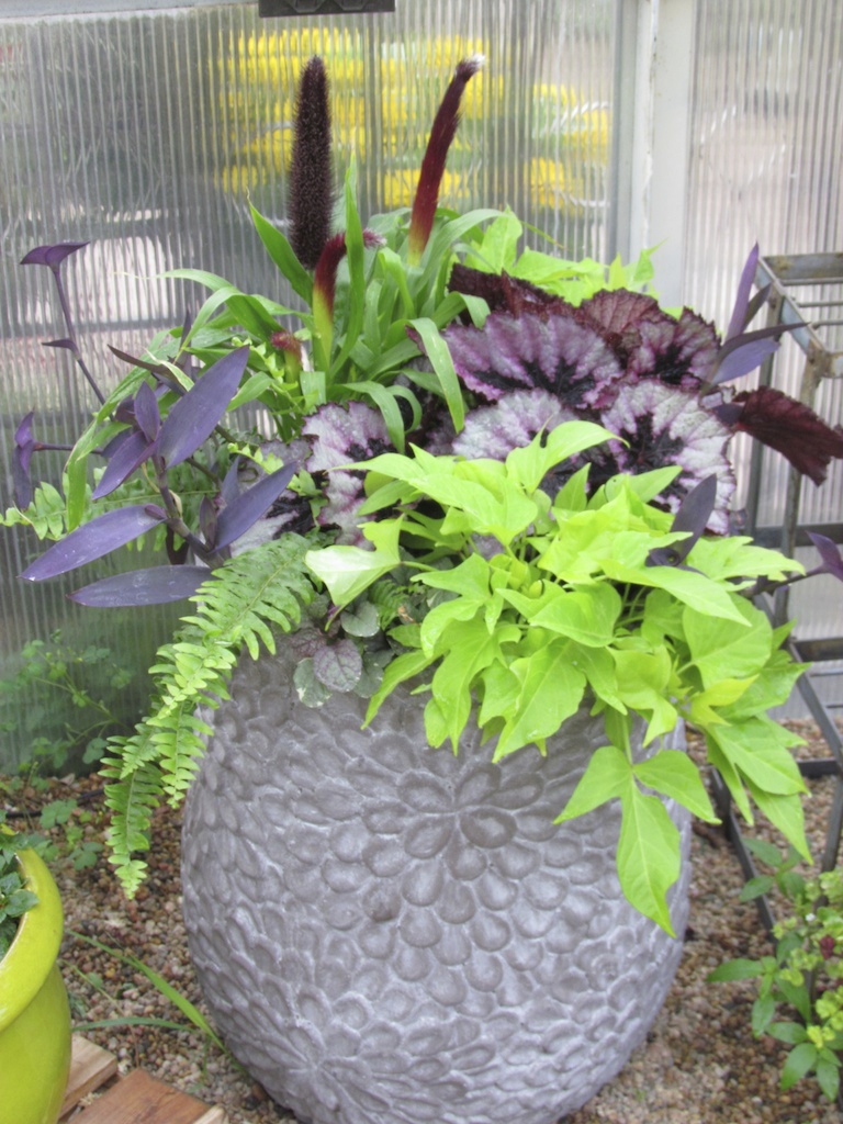 Container Garden with Chartreuse Sweet Potato Vine