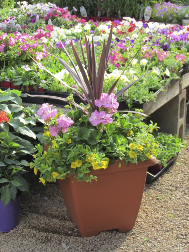 Planter with Spike, Pink Geraniums and Yellow Callibrachoa