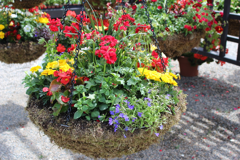 Moss Hanging Basket with Sun Annuals