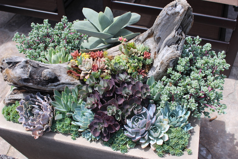 Succulent Planter with Wood Accents