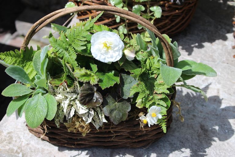 Basket with White Wax and Tuberous Begonia
