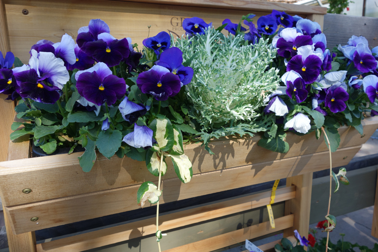 GRO Products Spring Pansies and Kale