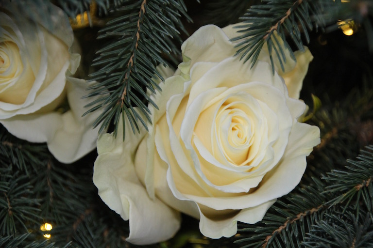 Fresh White Roses Adorn a Christmas Tree