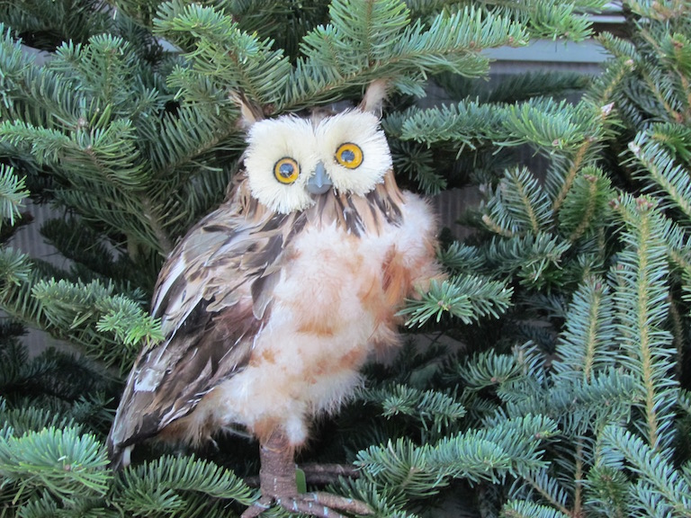 Brown owl on a concolor Christmas tree