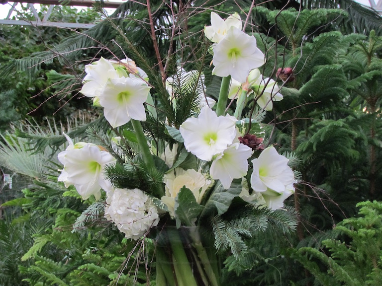 Freshly cut white amaryllis with hydrangeas in a holiday arrangement