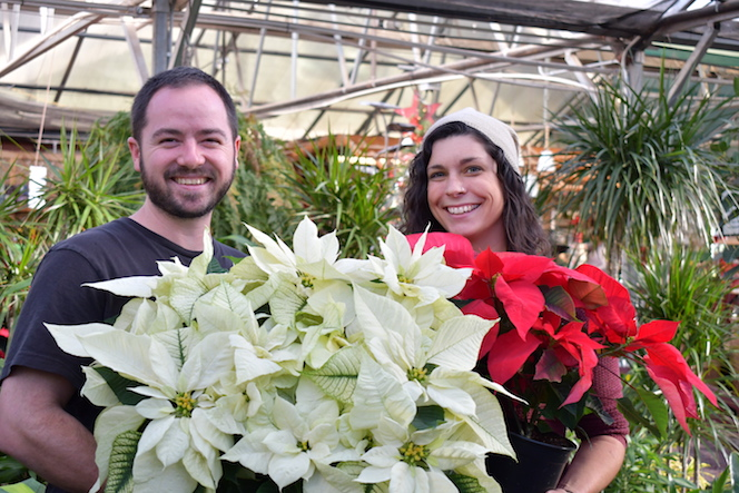 Trevor with a beautiful white poinsettia