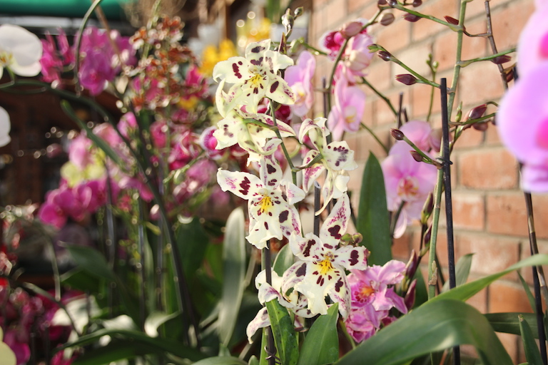 Lots of real orchid plants