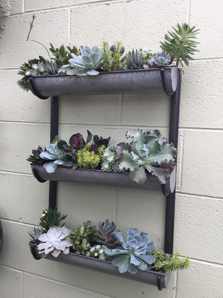 Three tiered wall planter with succulents